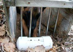 http://3.bp.blogspot.com/_QcWcYUNi3mY/TAXRwI3PouI/AAAAAAAABrs/Kr_0SBLKawo/s1600/5-30-10+earthdog1.JPG