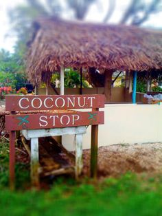 NIUE! Taste some delicious coconuts in the stall on the side of the road in Niue! #Niue