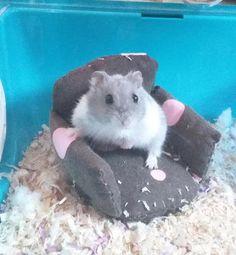 Gay hamster names