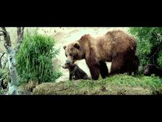 Terre des ours (2014)      a.k.a. Land of the Bears (2013)  Documentary [1 h 27 min]  Marion Cotillard Director: Guillaume Vincent Writers: Michel Fessler, Yves Paccalet, Guillaume Vincent  IMDb rating: ★★★★★★★☆☆☆ 7.3/10 (79 votes)      Set in the wilderness of the Kamchatka Peninsula, the