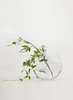 Shabi Chic, Glass Vase, Plants, Color, Colour, Plant, Planets, Colors