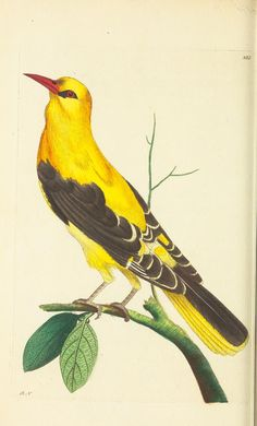 v.8 - The naturalist's miscellany, or Coloured figures of natural objects - Biodiversity Heritage Library
