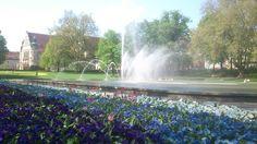Fontanna w parku A. Mickiewicz | Fountain in the A. Mickiewicz park