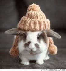 #roedores #conejo #mascota
