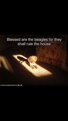 Blessed are we to have the Beagles ♥...Amen.