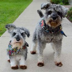If you send Cuddle Clones a photo of your pet (and money, of course), they'll hook you up with a custom-made stuffed animal or figurine.