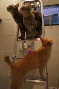 Tigrão, Ágatha e Mel ajudando na manutenção do banheiro