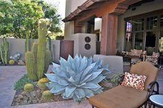 Jardines & Patios de cactus