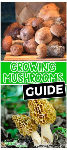Growing mushrooms indoors at home is super simple. We go over the steps on how to grow mushrooms as an at home diy or for profit. Fall Vegetables, Types Of Vegetables, Growing Vegetables, Mushroom Guide, Mushroom Grow Kit, Mushroom Recipes, Garden Mushrooms, Edible Mushrooms, Stuffed Mushrooms