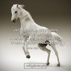 Horses, God, Animals, Bible, Dios, Animales, Animaux, Animal, Allah