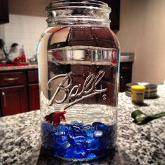 Beta fish in his mason jar