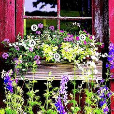 Easy Recipes for Beautiful Window Boxes in Sunny Spots - old fashioned or old recycled planters.   Hmmmmmm II