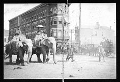 Parade with 2 elephants - downtown Chattanooga 1899-1903. Elephants, in Chattanooga?