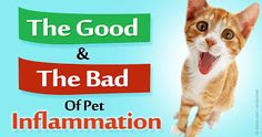 http://healthypets.mercola.com/sites/healthypets/archive/2015/10/15/animal-anti-inflammatory-genes.aspx?e_cid=20151015Z1_PetsNL_art_1&utm_source=petsnl&utm_medium=email&utm_content=art1&utm_campaign=20151015Z1&et_cid=DM87834&et_rid=1167957966 http://www.bestcatanddognutrition.com/roger-biduk/your-dog-is-a-carnivore-and-a-domesticated-wolf/ Roger Biduk