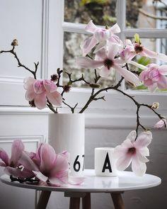Es Macht Mich Unendlich Glücklich Jeden Tag Zu Beobachten, Wie Die  Magnolienzweige Blühen Und Verblühen