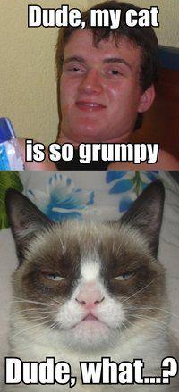 Grumpy Cat looks like he's been stonin' w/ mr. dude