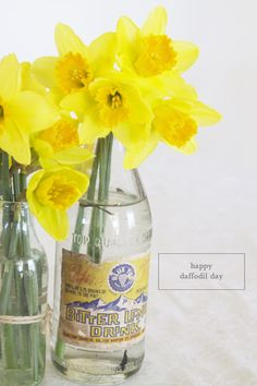 daffodils :)