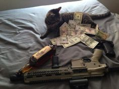 Money... booze... airsoft... Watch out for that cat!