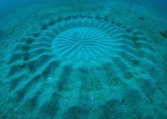 Œuvre d'art sous-marine réalisée par un petit poisson ! Etonnant...