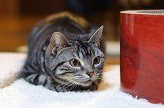 cat #440 | Flickr - Photo Sharing!