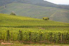 Alsazia, la strada del vino | Camperistas.com