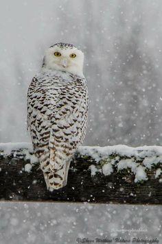 Owlish.