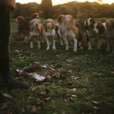 """La Table des Chiens"" / Jean-Luc Chapin / 2013 / Agence VU #dogs #rabbit #hunting #hunter #France #Sarthe"