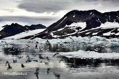 Landscapes of the Arctic: Glaciers