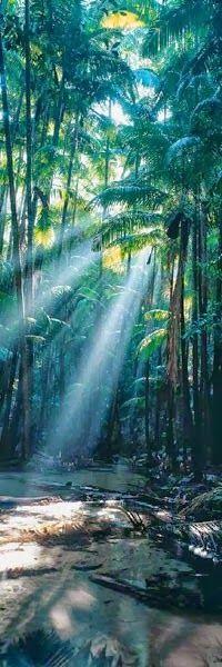 Gorgeous shot of the sub-tropical rainforest in and around Wangoolba Creek. #fraserisland #queensland #australia www.fraserisland.net