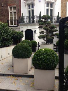 Knightsbridge pots