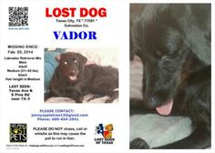 #lostdog #GalvestonCo #TexasCity #Dickinson #LDOT -- Vador has been missing since Feb 3, 2014 from Texas City, TX near Hwy 3 and S. Pine St.  HE IS VERY LOVED AND TERRIBLY MISSED! please help bring him home