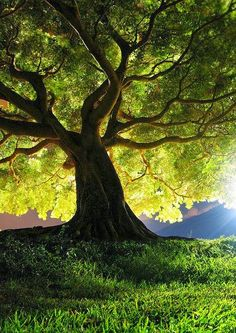 I think that I shall never see A poem lovely as a tree. A tree whose hungry mouth is prest Against the earth's sweet flowing breast; A tree that looks at God all day, And lifts her leafy arms to pray; A tree that may in Summer wear A nest of robins Beautiful World, Beautiful Places, Trees Beautiful, Amazing Places, Nature Tree, Tree Forest, Jolie Photo, Tree Of Life, Amazing Nature