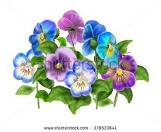 Pansy, Colored Violet Viola Tricolor, Spring Flowers, Isolated On White Background. Digital Illustration. Art, Print, Web, Fashion, Textile, Texture, Home Decor. - 378533641 : Shutterstock