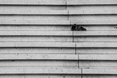 MAUD WEBER  Solitude #2 24 x 36 Photographie 280€