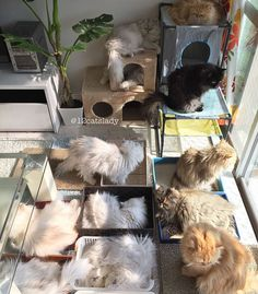 Instagram user 12 Cats Lady decided to share the adventures of being a full time cat-mom to 12 gorgeous Persians.