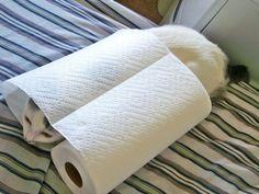 (via I iz Paper Towel! - a photo on Flickriver)