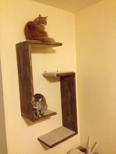 An idea: Cat Tree Hanging Shelf Unit Set of 2 by WODdawgApparel on Etsy, $75.00