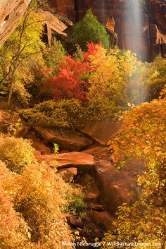 Lower Emerald Pools, Zion Canyon