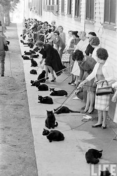 Ladies and their black cats. Meow.