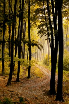 Shaded Luz Natural, Mystical Forest, Desktop Background Images, Forest Path, Walk In The Woods, Natural Scenery, Amazing Nature, Trees To Plant, Beautiful Landscapes
