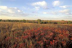 Prairie vegetation