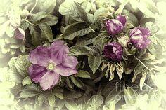 Title  Pink Flowers And Leaves   Artist  Cathy Anderson   Medium  Digital Art - Digital Art Photograph
