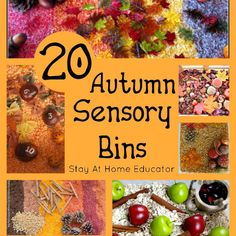 An autumn sensory bin can serve as a means to not only meet the sensory needs of preschoolers, but can also be a means to explore math, reading and science.