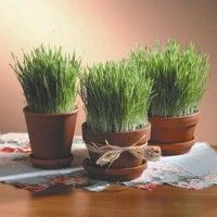 Best Garden Decorations Tips and Tricks You Need to Know - Modern Grass Centerpiece, Green Centerpieces, Centrepieces, Golf Theme, Wheat Grass, Retirement Parties, Our Wedding, Planter Pots, Diy