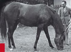 Nasrullah taking a break.  Bred in Ireland by the Aga Khan, he could only race at Newmarket due to WWII transport restrictions.  Sold in 1944 over a cup of tea, he became a champion sire in 1951.  In 1950, he was purchased for $370,000 and imported to Claiborne by Arthur Hancock to become a 5x Leading Sire.