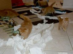 cute ginger cat mama and her 6 ginger kittens toilet paper