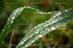 Wassertropfen Blatt Morgentau