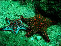 Estrelas do mar Sea Urchin Shell, Sea Shells, Mermaid Stories, Gods Creation, African Animals, Ocean Life, Sea Creatures, Under The Sea, Pisces