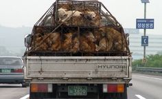 Petition · Stop the Brutal Dog and Cat Meat Trade in South Korea! · Change.org