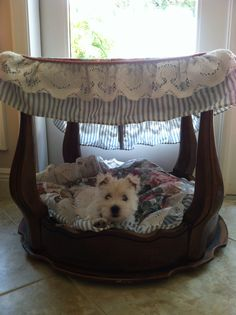 This is the canopy bed. $17 end table from a thrift shop plus old linens. The puppy is named Mia. She's 2 months old.